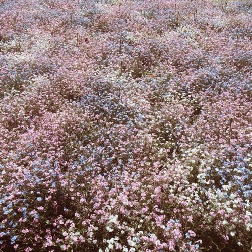 Candyfloss Flowers In 2020 Spring Aesthetic Mother Nature Flowers
