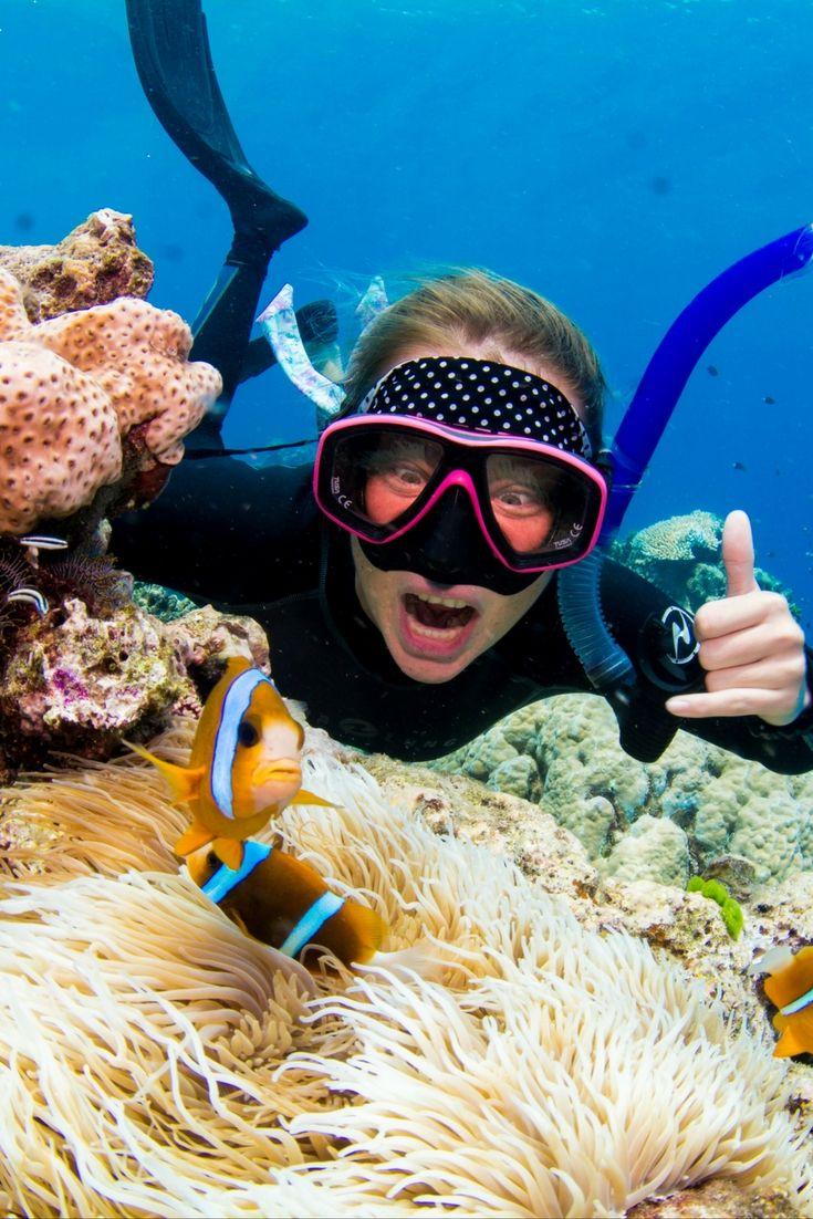 #GreatBarrierReef   Great barrier reef diving, Great ...