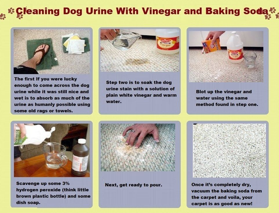 Carpet With Vinegar And Baking Soda