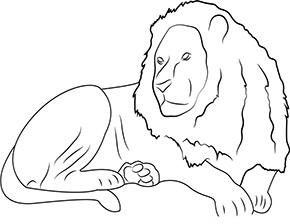 ausmalbild löwe im zoo | ausmalbild löwe, ausmalen