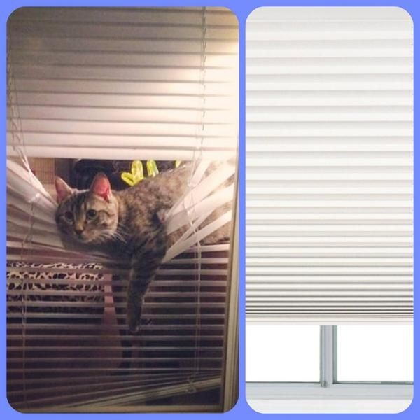 Window Shades The Look You Want Without The Work Cat Proofing Window Shades Windows