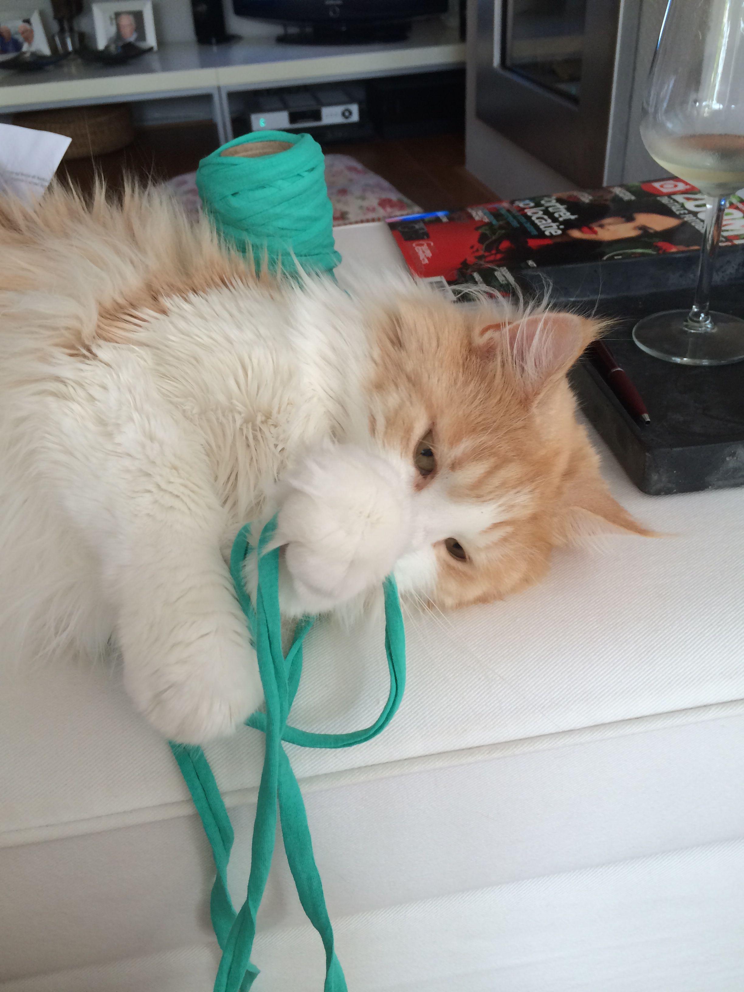 Schiet Niet Echt Op Zo Breien Orange Cats Cats Best Friends
