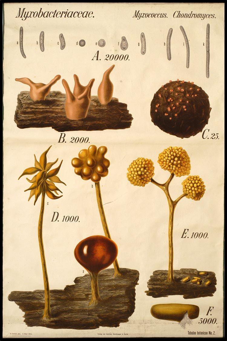 Tabulae Botanicae | Photography | Pinterest | Natural history ...