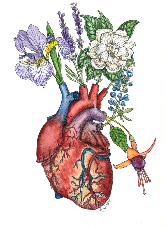Giclee Print- \'Vascular Vase\' Anatomical Watercolor Painting of ...
