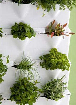 C mo colocar un jard n en la cocina dise o y for Diseno de jardines para el hogar
