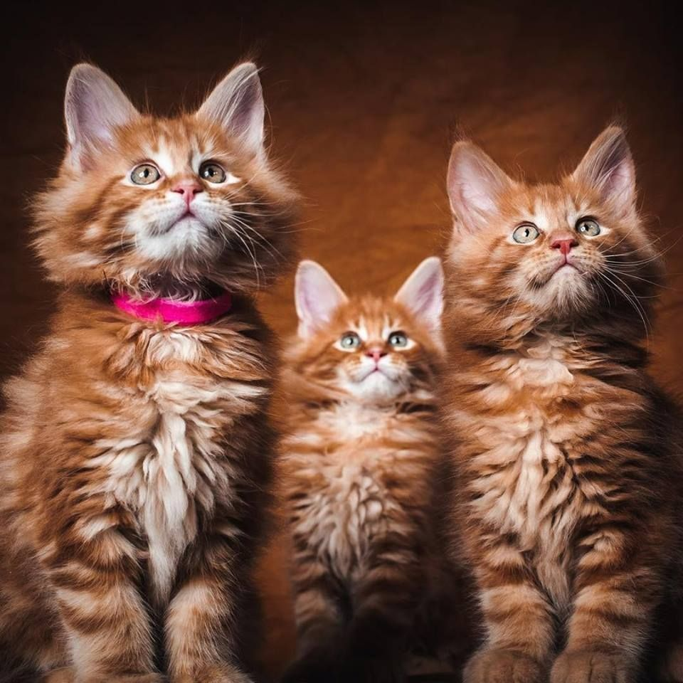 Pin By Jess H On Kittens Cats 2 Kittens Cute Animals