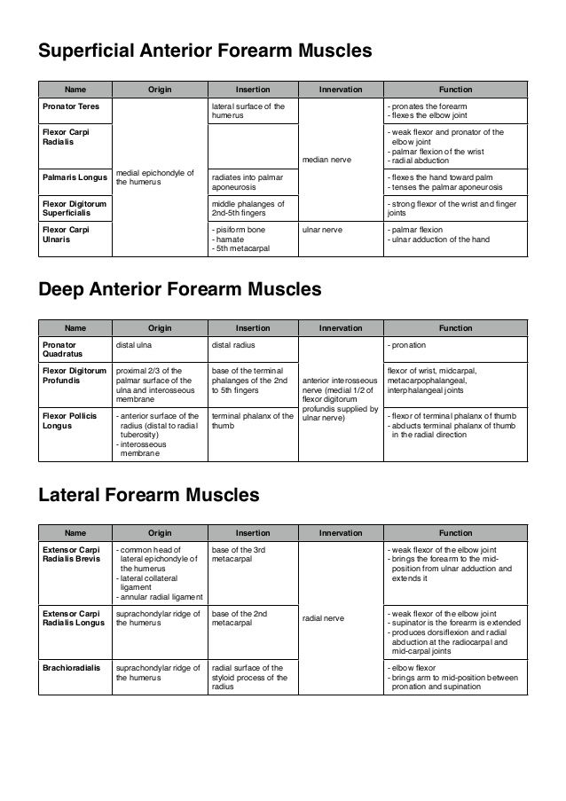 Muscles of the upper limb | Muscle | Pinterest | Muscles, Physical ...