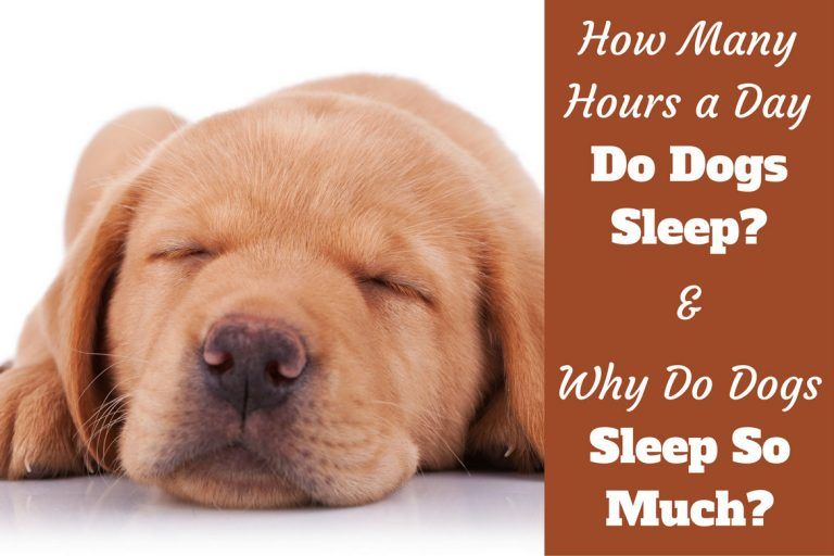 Why do Dogs Sleep So Much? How Many Hours a Day do Dogs