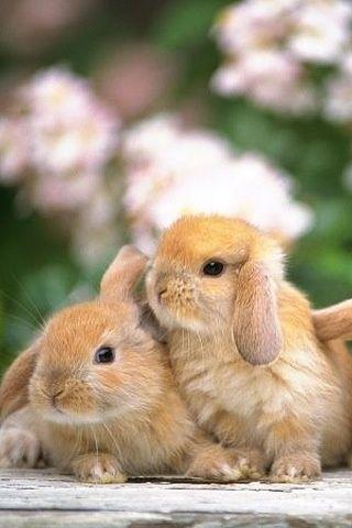 Melusine h animal mignon mignons petits lapins - Animal mignon ...