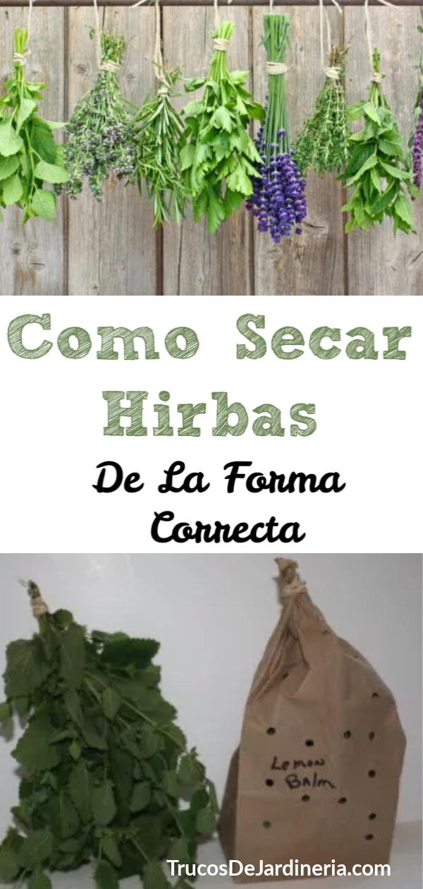 Cómo Secar Las Hierbas De La Manera Correcta Secado De Hierbas Plantas Aromaticas Y Medicinales Hierbas