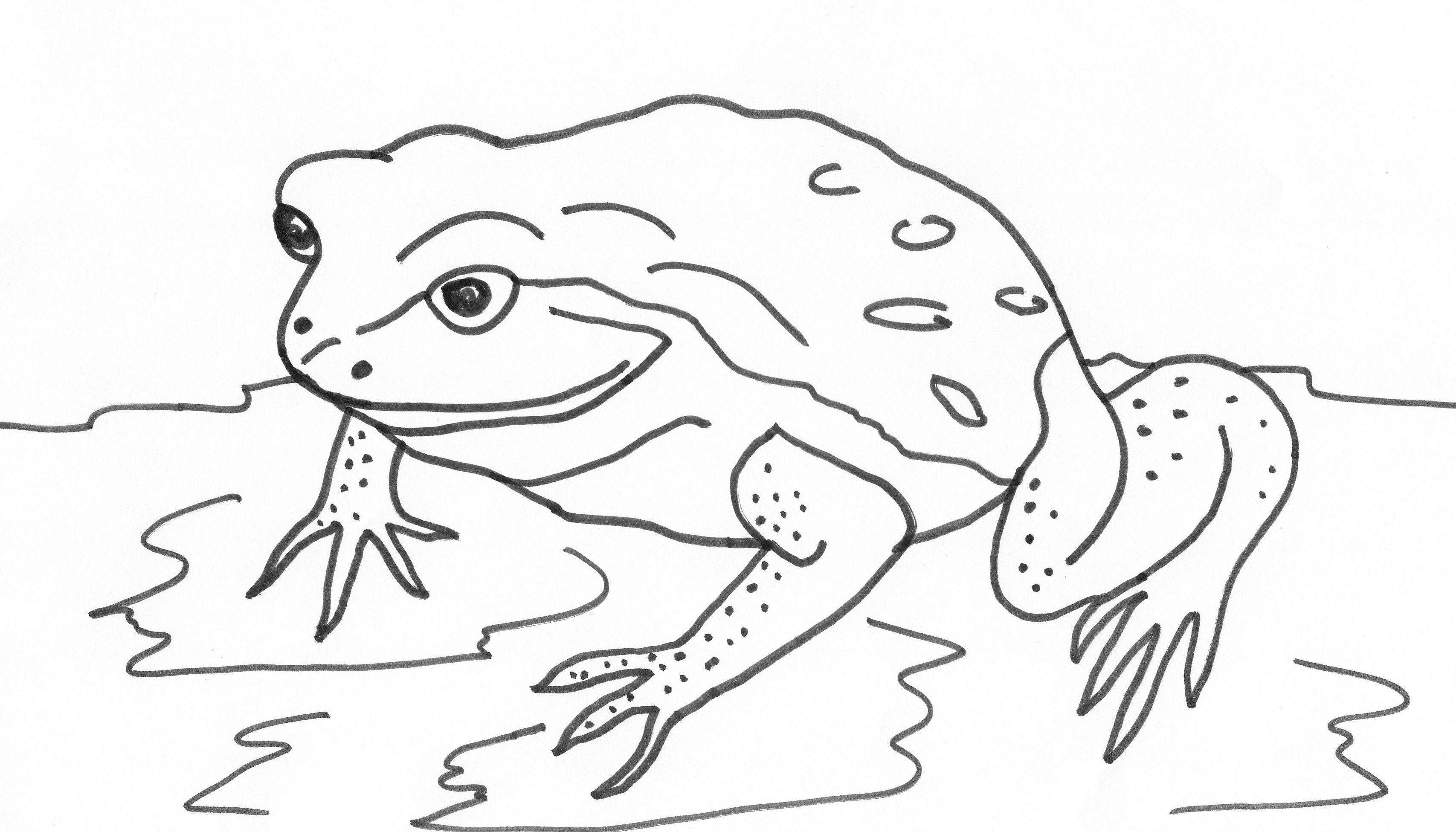 Frosch Ausmalbild 07 Tiere Zum Ausmalen Ausmalbilder Ausmalen