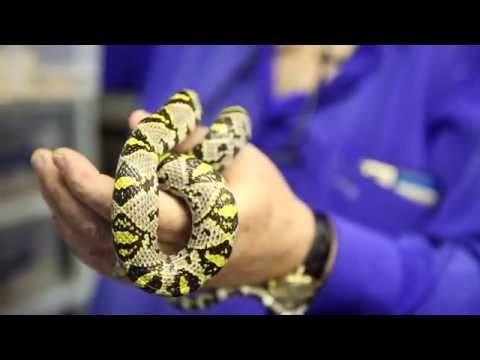 Herpetologist Careerinstem Free Resources To Learn More About A Stem Career In Herpetology Stem Careers Vet Tech Animals
