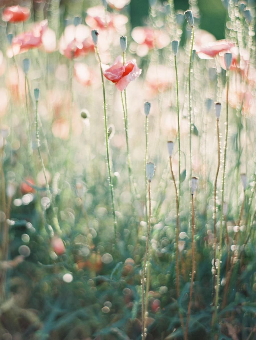 inspiration | spring blooms | erich mcvey photography | via: style me pretty