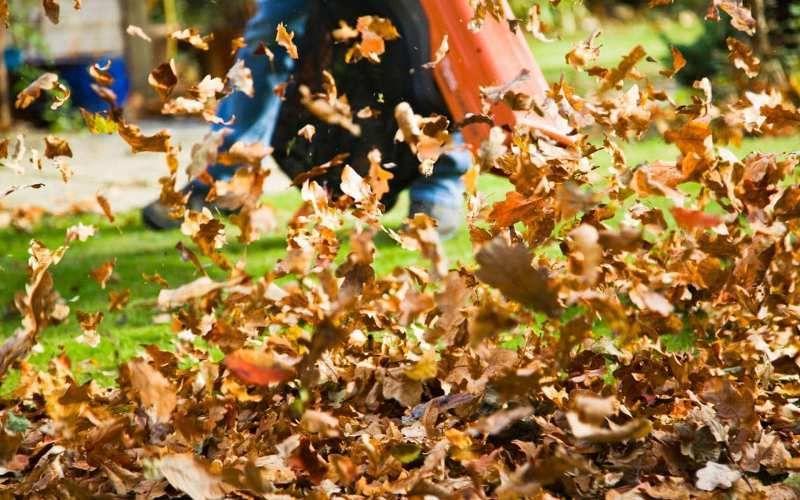 Husqvarna 150bt Reviews The Leading Gas Backpack Blower Garden Yard Ideas Garden Power Tools Gardening Advice