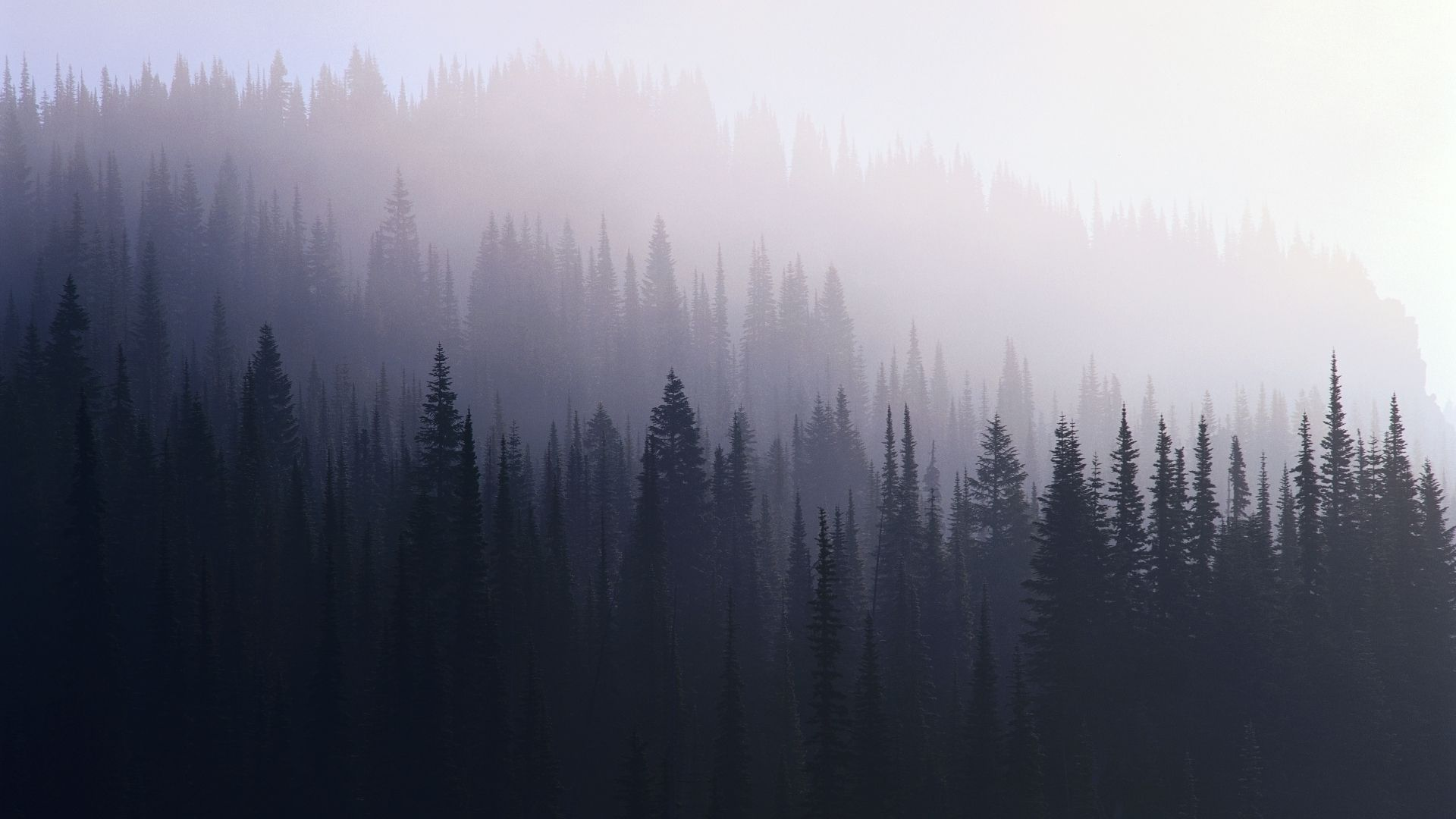 Beautiful Wallpapers For Iphone 6 Plus Photography Dark Forest Wallpaper Hipster Wallpaper