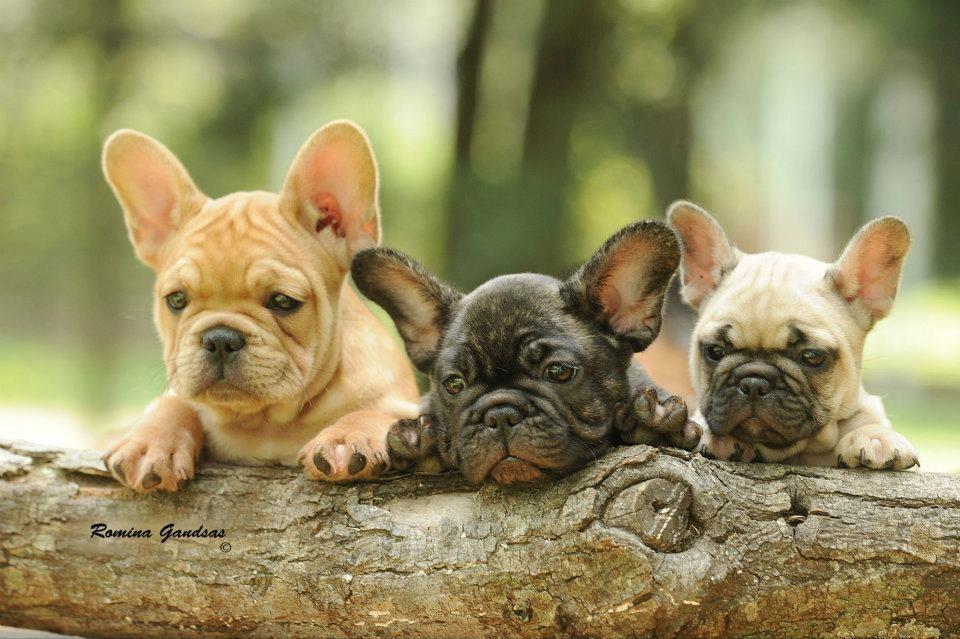 How cute can cute be??