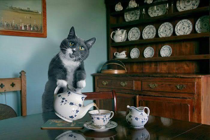 """""""Fancy a spot of tea?"""""""