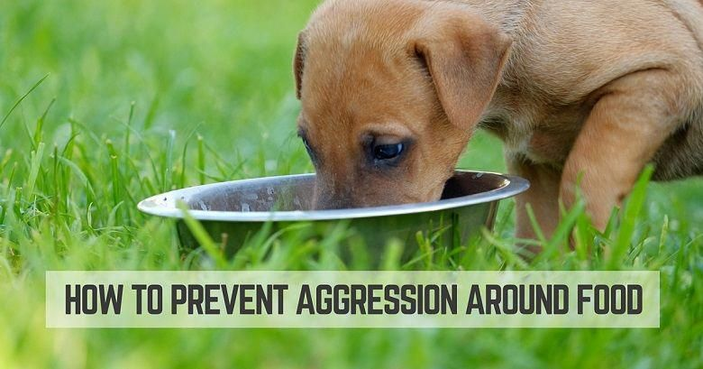 How to prevent a puppys aggression around food puppy