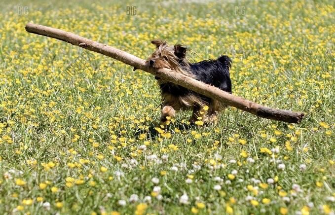 And of course the biggest sticks are only for the G O O D E S T B O Y E S http://ift.tt/2ry9WXU