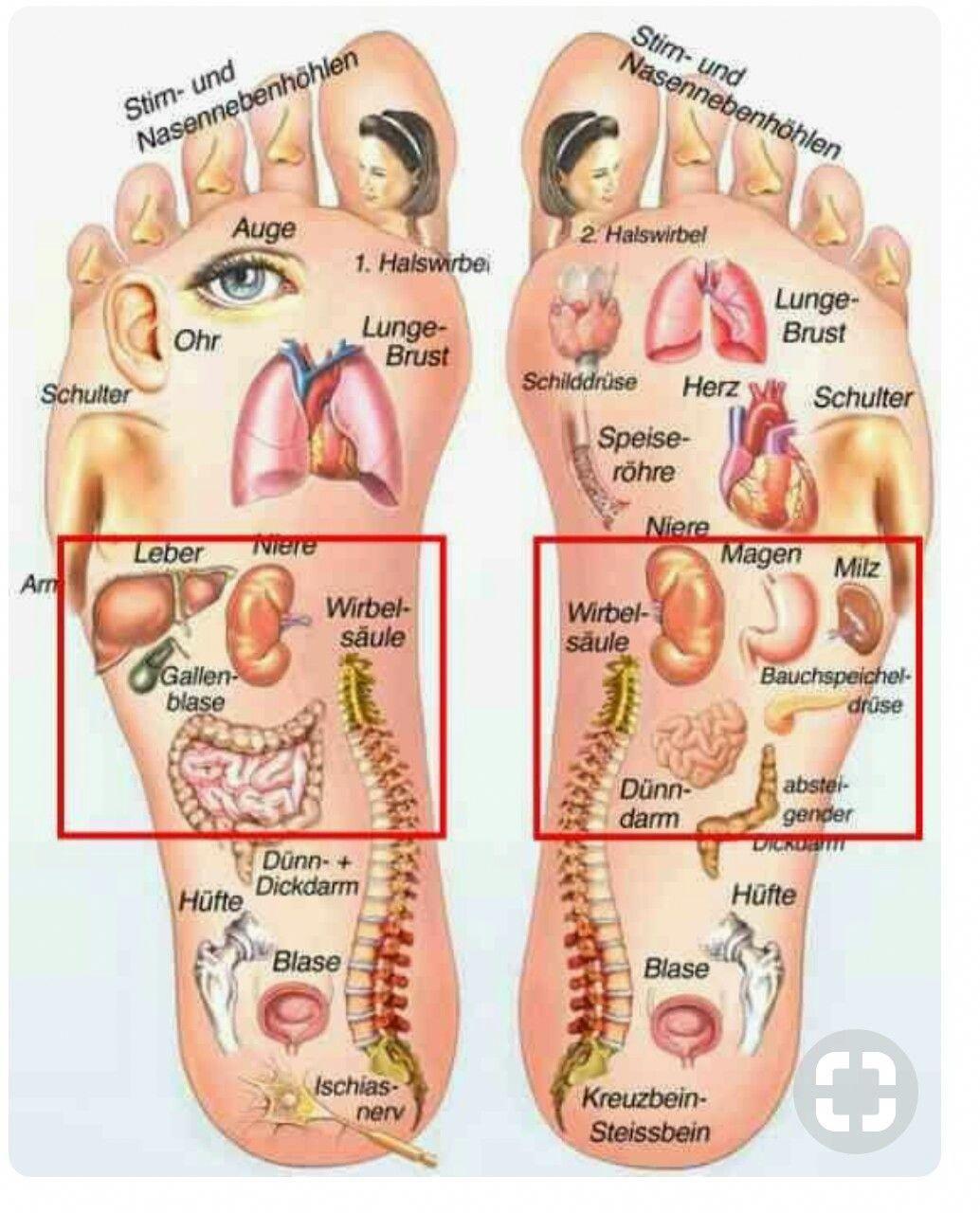 Hare Stew Healthy Food Mom Recipe Foot Reflexology Reflexology Hand Reflexology