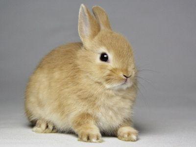 赤ちゃんうさぎ うさぎ専門店 うさぎの森 うさぎ 子ウサギ 可愛すぎる動物