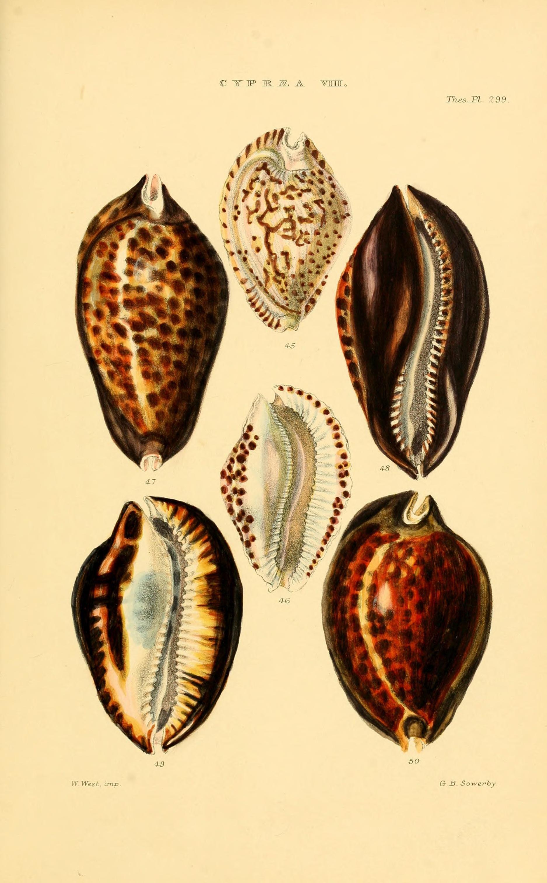 Biodiversidad del mar
