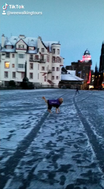 Sawyer the #GoldenRetriever tour guide of #Edinburgh, #Scotland having fun in front of #EdinburghCastle  and enjoying the beautiful lights of Camera Obscura! 😀🐕🐾❤️🏴󠁧󠁢󠁳󠁣󠁴󠁿(🔊on) #SawyerTheGoldenGuide #LoveScotland #Travelling #VisitScotland