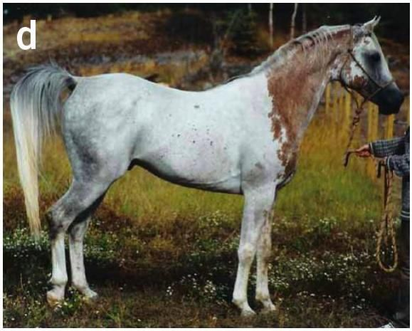 Rare Horse Coats Rare Horse Mark...