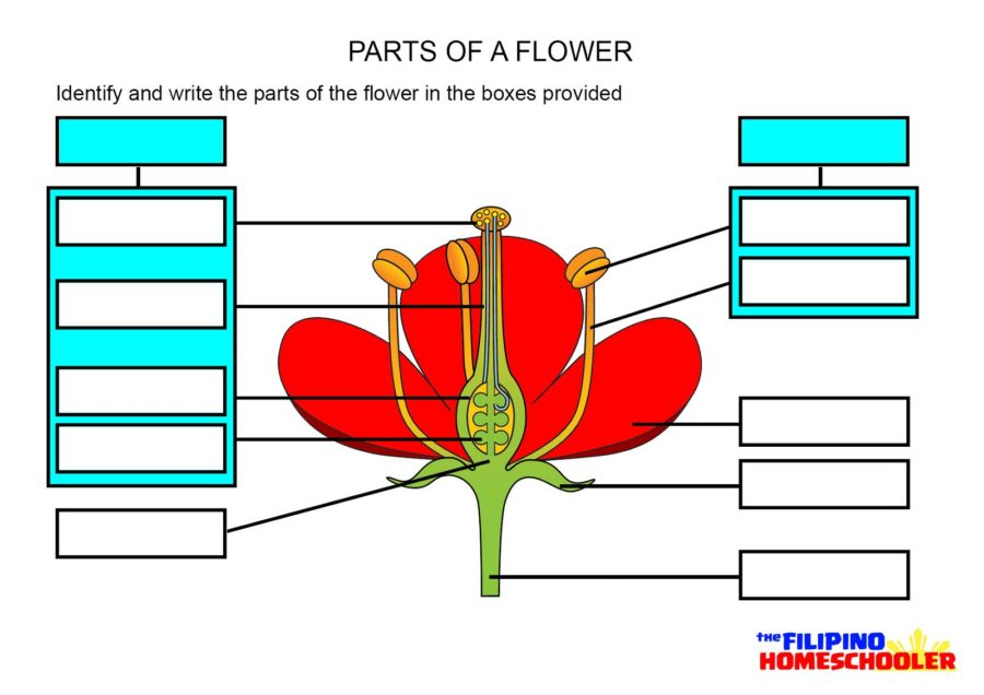 Flower Parts Diagrams Printable Diagram