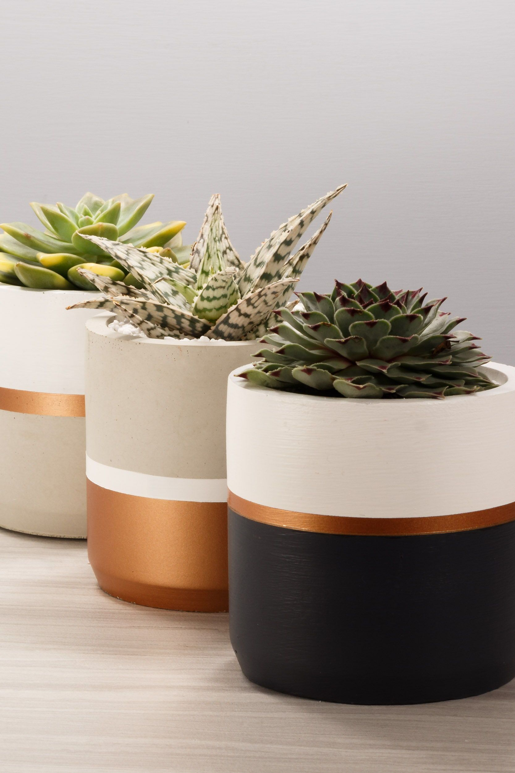 Fleurs En Pot Resistant Au Gel bronze _ concrete succulent planter _ 2 sizes, 3 colorways _