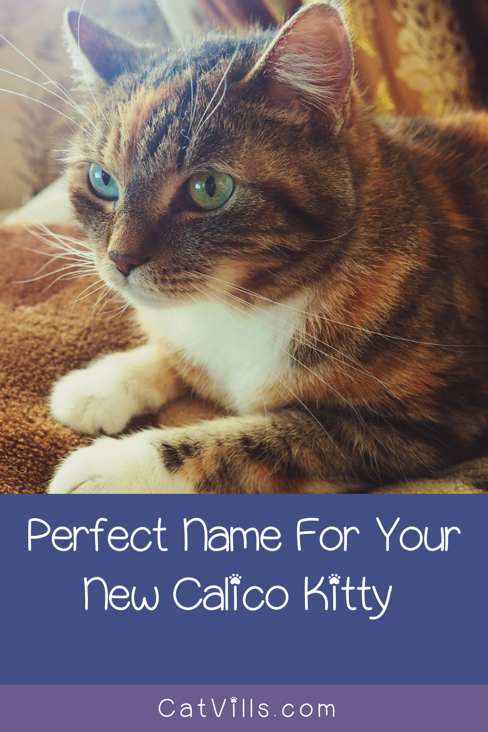 60 Clever Calico Cat Names You'll Adore CatVills in 2020