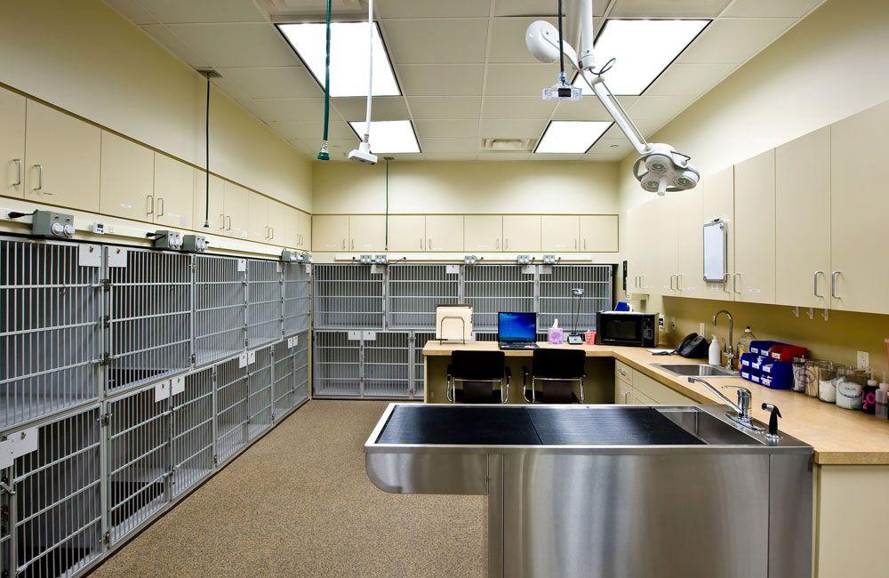 Veterinary Specialty Architects Veterinary Orthopedic