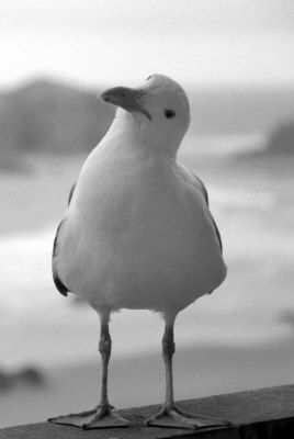 Seagull Visits: Art, Poetry, Photography