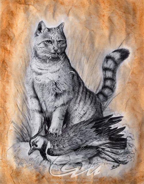 ( Scottish Wildcat ) Plumilla y acrílica terracota - 40x30 sobre papel. Esta a la venta tanto el original, como copias del mismo firmadas y numeradas por el autor, Angel R. Moya, que donara un 20% de las ventas a proyectos para la protección de este escaso felino.