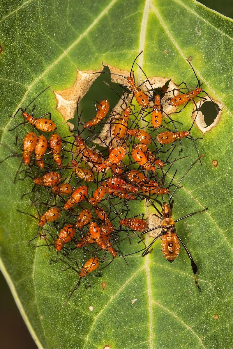 Dorable Natural Bug Spray For Garden Elaboration - Brown Nature ...