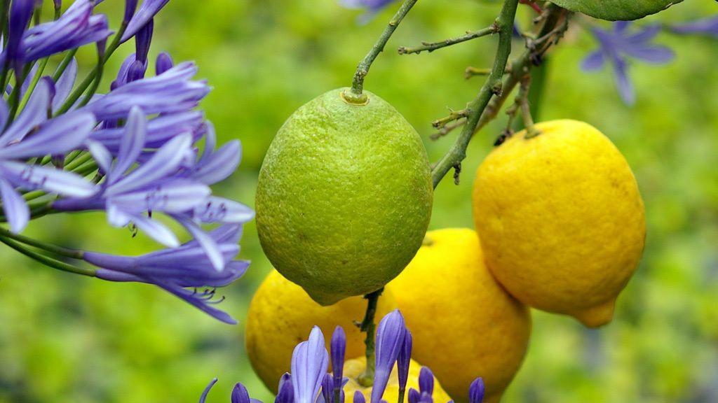 10 Pflegeleichte Pflanzen Fur Den Garten Mit Bildern Garten Pflanzen Pflegeleichte Pflanzen Pflanzen