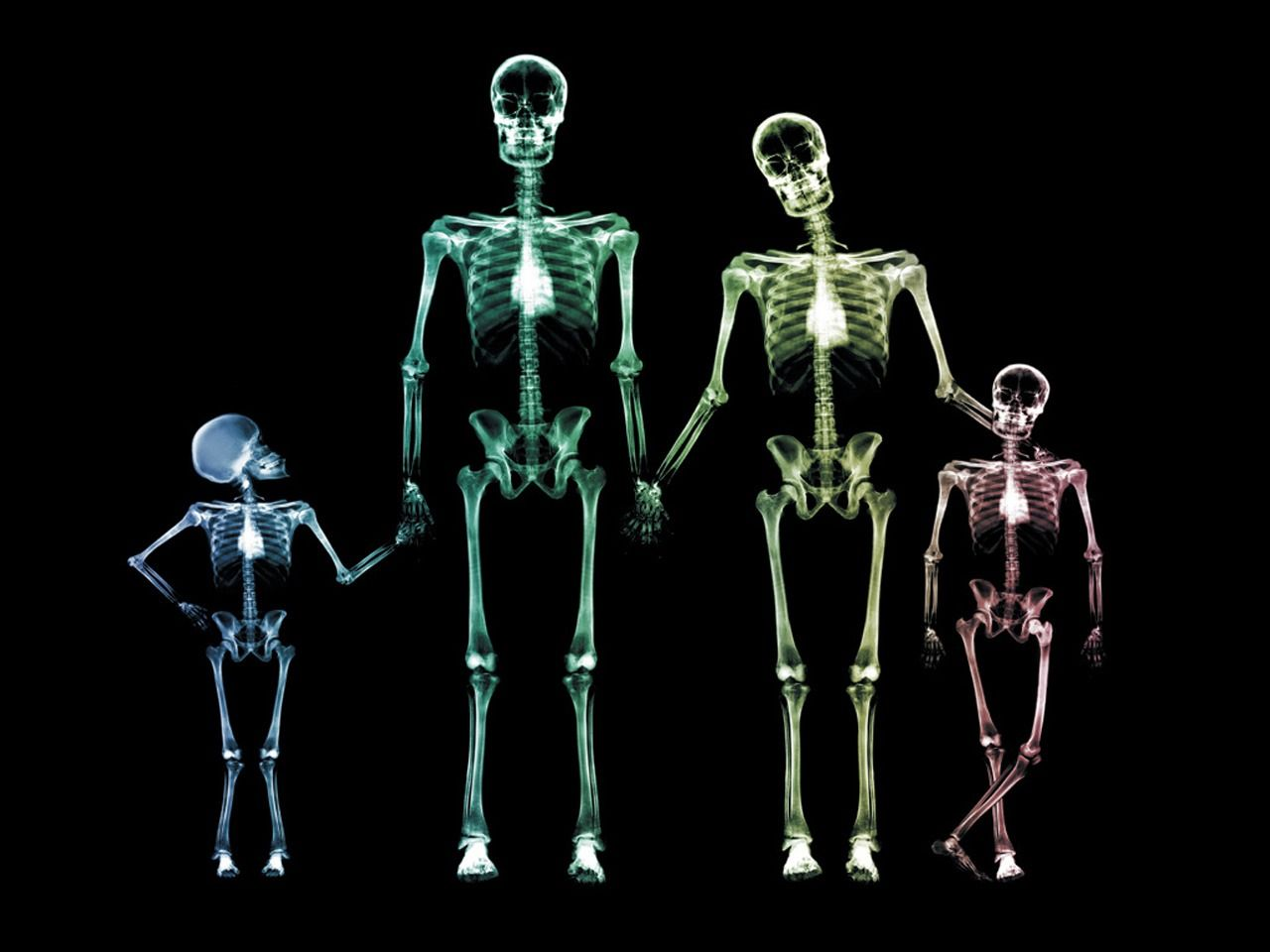 X Ray Family Wallpaper X Ray 3D Déco Pinterest