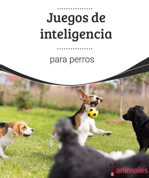 Juegos De Inteligencia Para Perros Mis Animales Perros Adiestramiento Canino Guarderia Perros