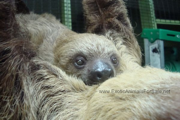 rare Baby Animals | Rare Wildlife and Baby Primates
