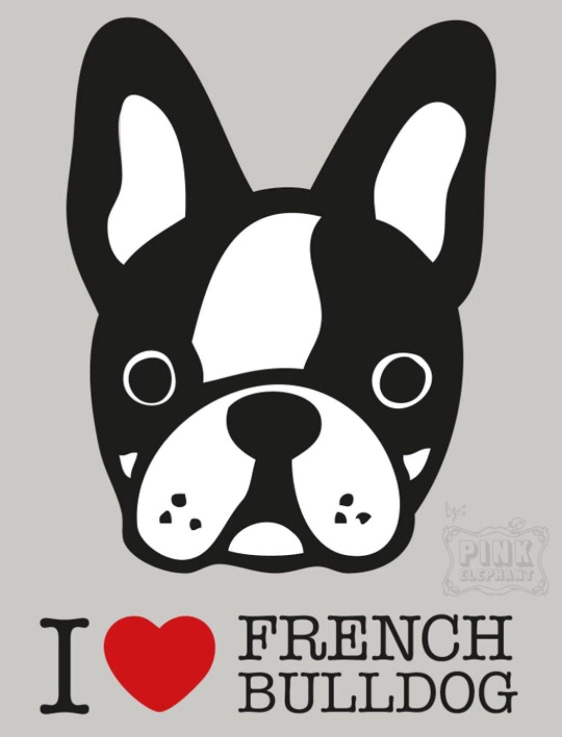 Pin de david en bulldog franc s pinterest - Bulldog frances gratis madrid ...