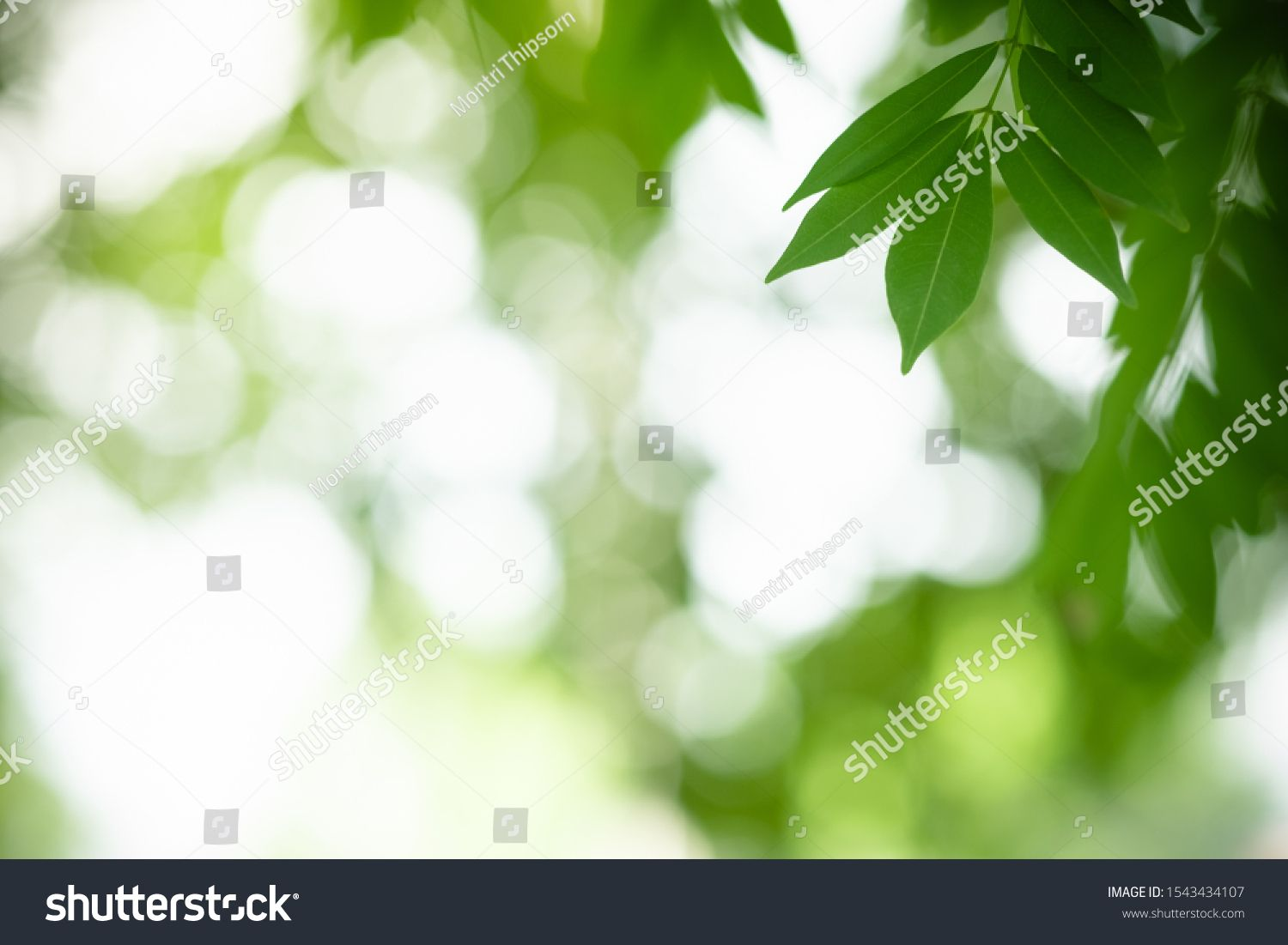 Close up of nature view green leaf on blurred greenery background under sunlight with bokeh and copy space using as background natural plants landscape, ecology wallpaper concept. #Ad , #AD, #greenery#blurred#sunlight#background