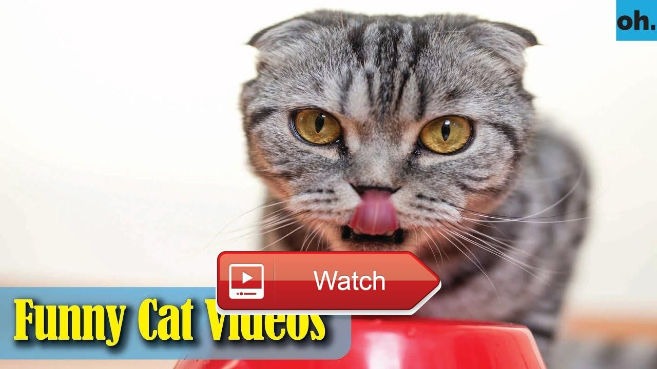 Cat videos funny cats funny cat videos kitten videos funny kitty