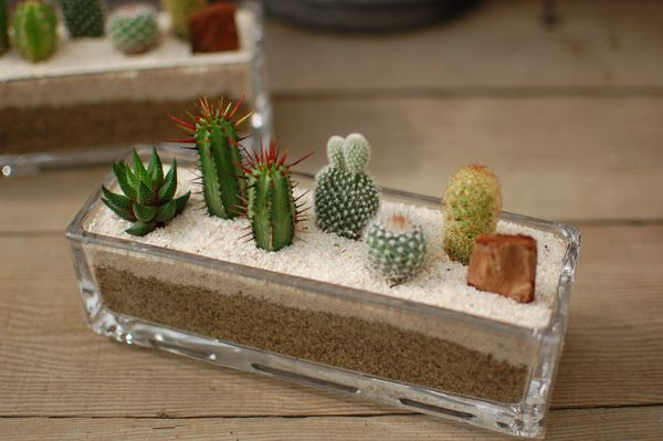 Photo of saboten-s: [I put a cactus, five kinds of fleshy plants and plant it / ガラス…