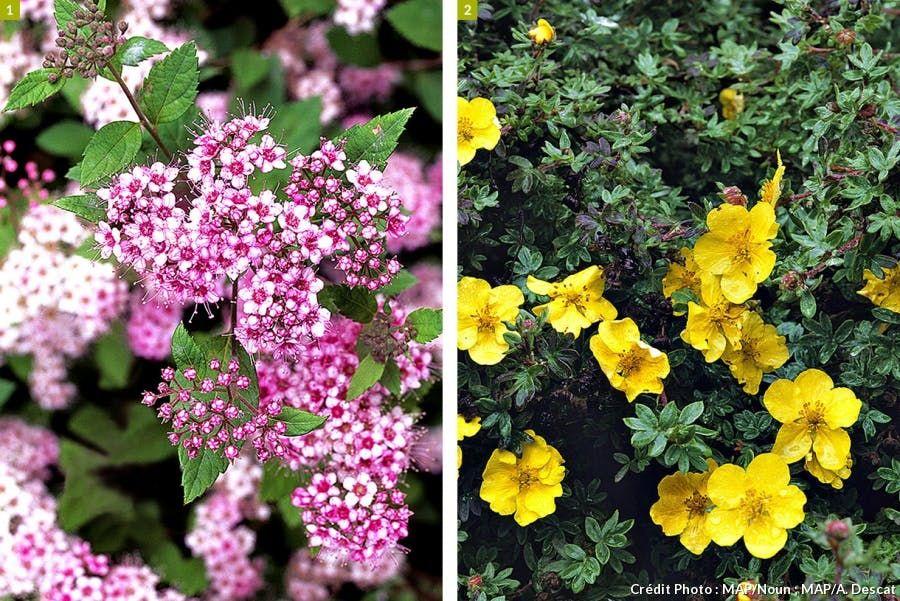 Jardin De Montagne Les Plantes Ideales A Cultiver Spiree Cultiver Jardins