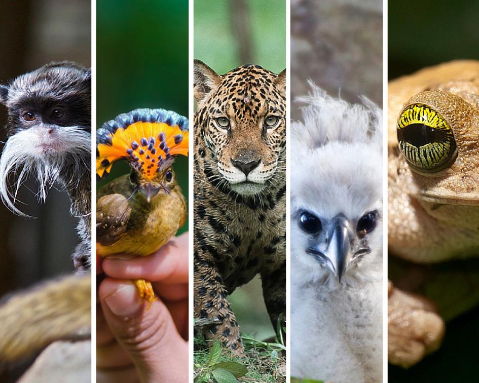 Meet 17 Amazing Amazon Animals Amazon animals, Animals