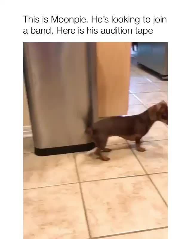Photo of Dackel Hund Meme