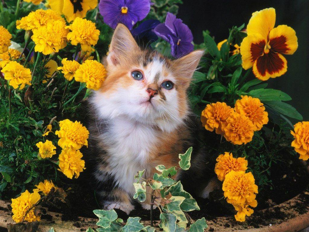 Ao invés de reclamar que as rosas estão cheias de espinhos, fique feliz pelos espinhos terem rosas.