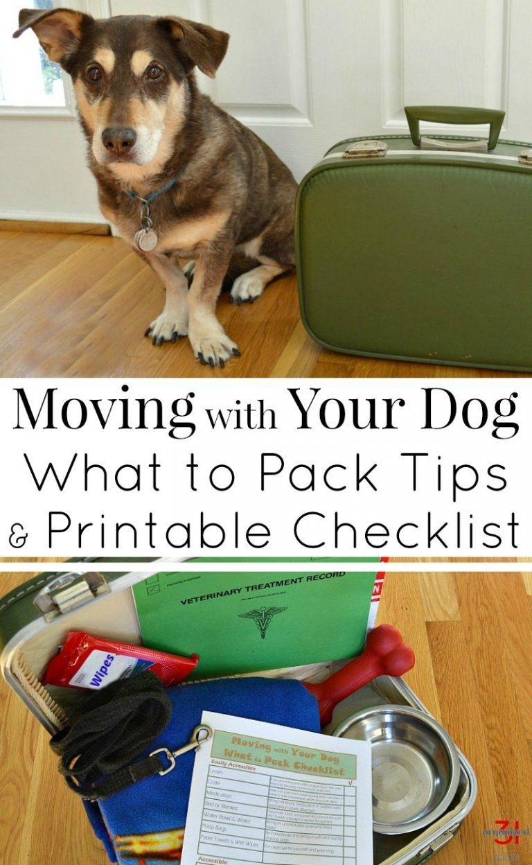 Moving With Your Dog Moving Tips Dog Organization Dog
