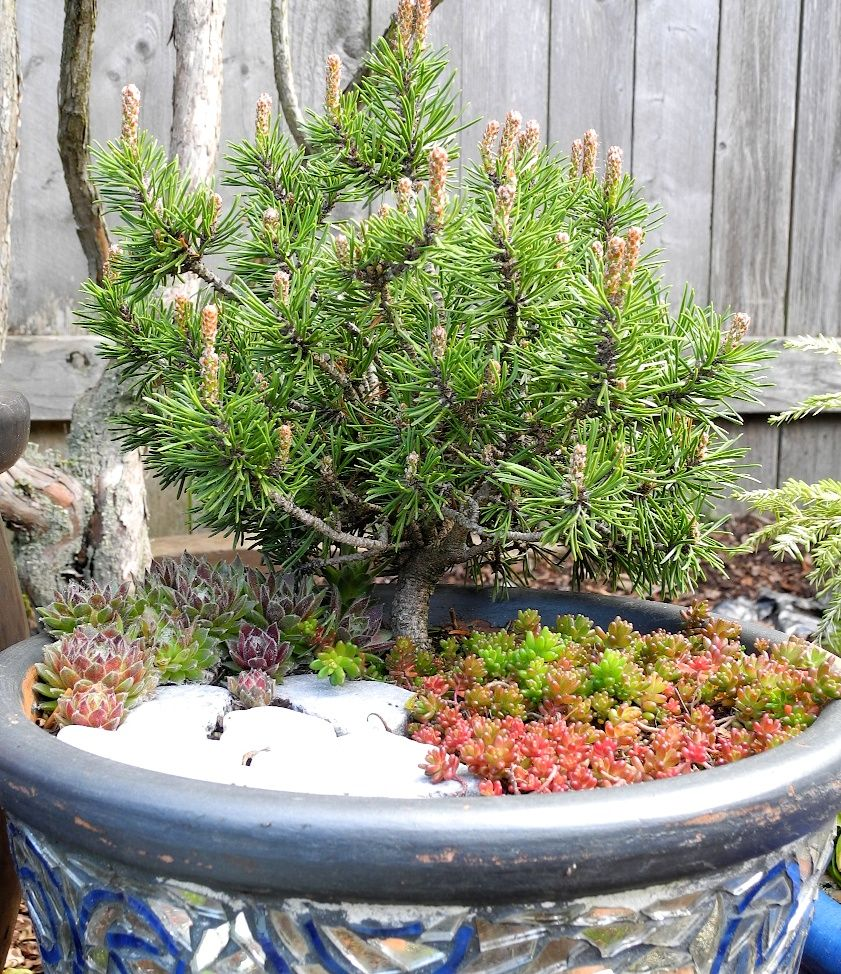 Large Of Miniature Garden Trees