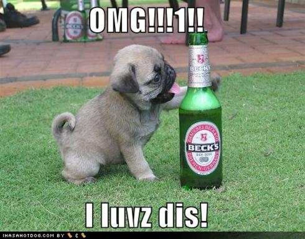 fun pictures | Copy of funny dog pictures pug loves beer drunk animals drinking beer ...